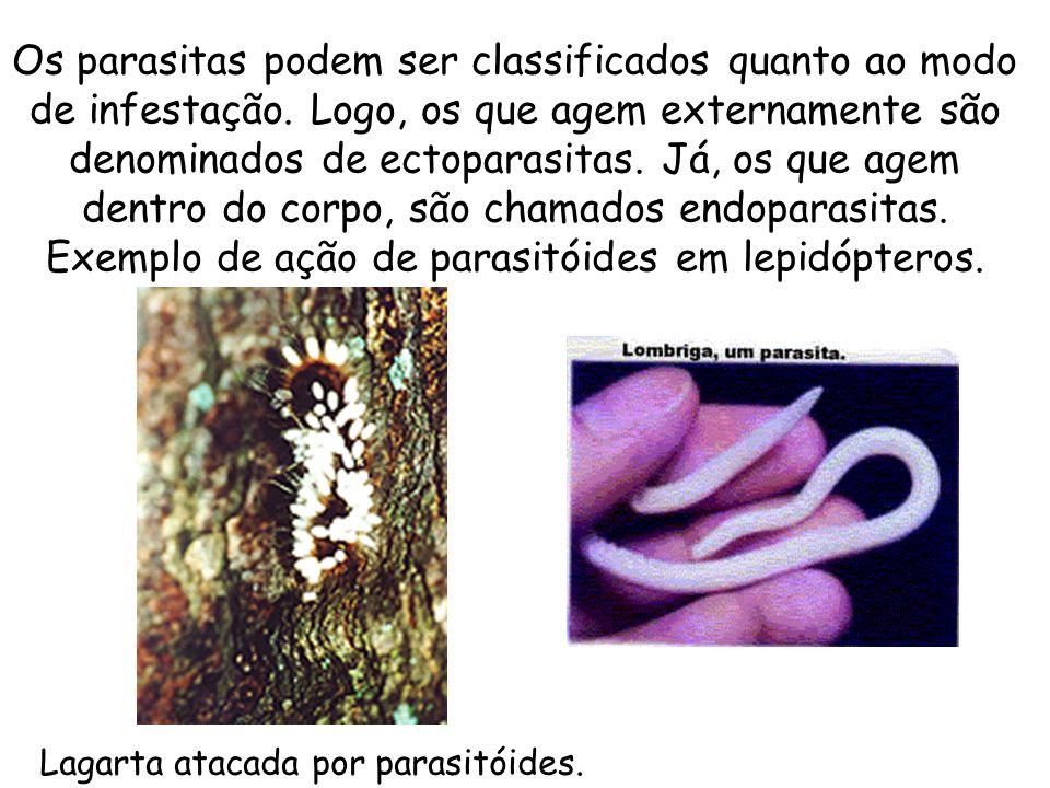 Exemplo de ação de parasitóides em lepidópteros.