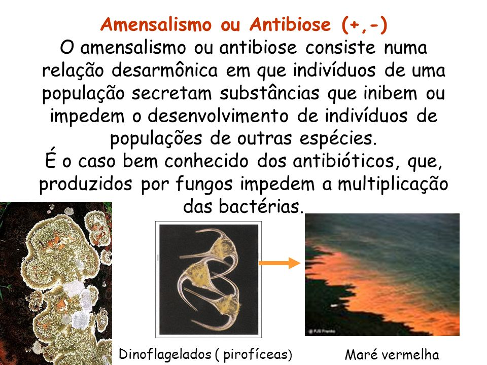 Amensalismo ou Antibiose (+,-)