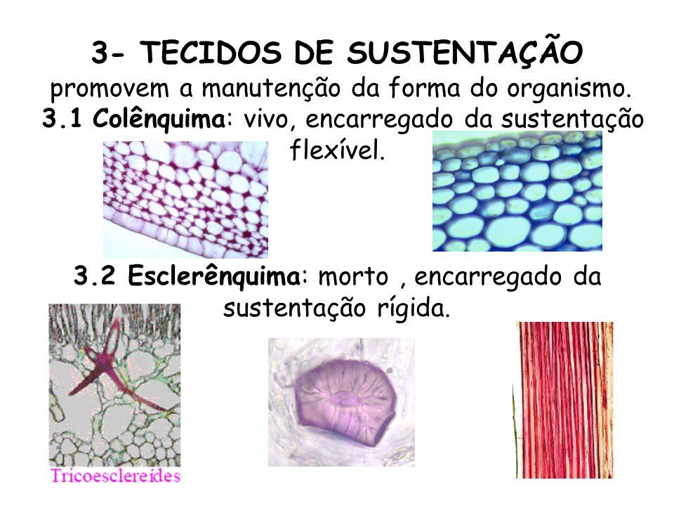 3- TECIDOS DE SUSTENTAÇÃO