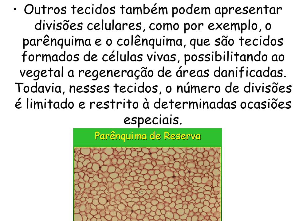 Outros tecidos também podem apresentar divisões celulares, como por exemplo, o parênquima e o colênquima, que são tecidos formados de células vivas, possibilitando ao vegetal a regeneração de áreas danificadas.