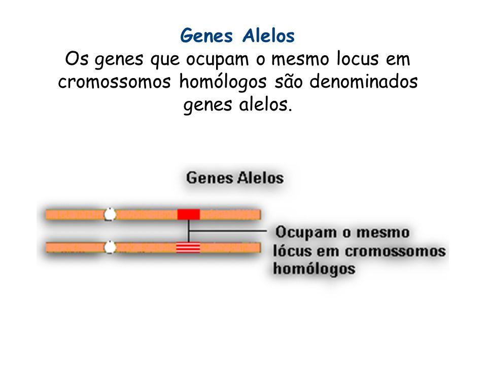Genes AlelosOs genes que ocupam o mesmo locus em cromossomos homólogos são denominados genes alelos.