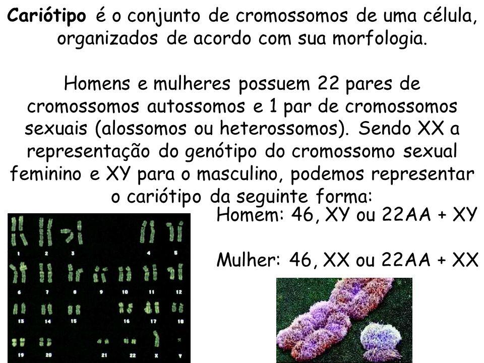 Cariótipo é o conjunto de cromossomos de uma célula, organizados de acordo com sua morfologia. Homens e mulheres possuem 22 pares de cromossomos autossomos e 1 par de cromossomos sexuais (alossomos ou heterossomos). Sendo XX a representação do genótipo do cromossomo sexual feminino e XY para o masculino, podemos representar o cariótipo da seguinte forma: