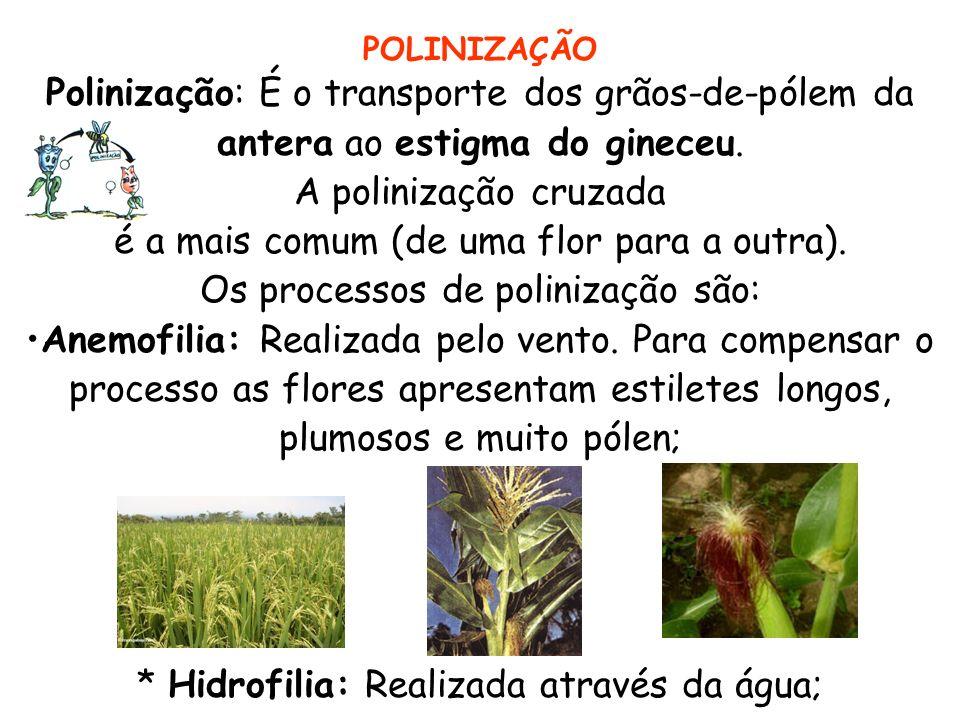 A polinização cruzada é a mais comum (de uma flor para a outra).