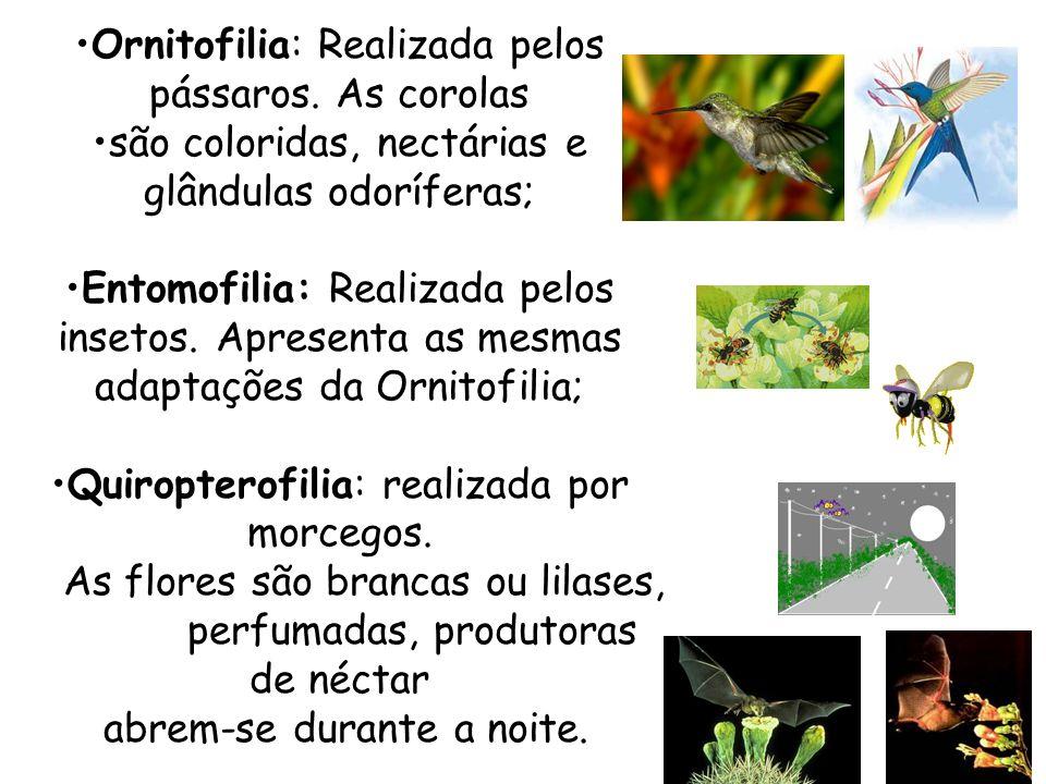 Ornitofilia: Realizada pelos pássaros. As corolas
