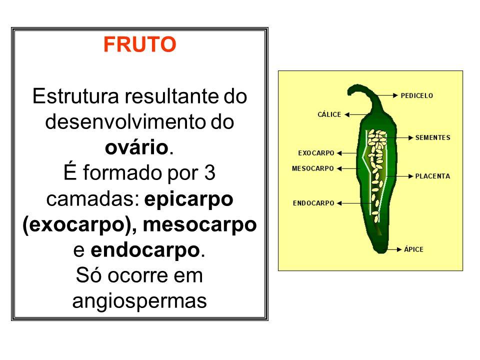 Estrutura resultante do desenvolvimento do ovário.