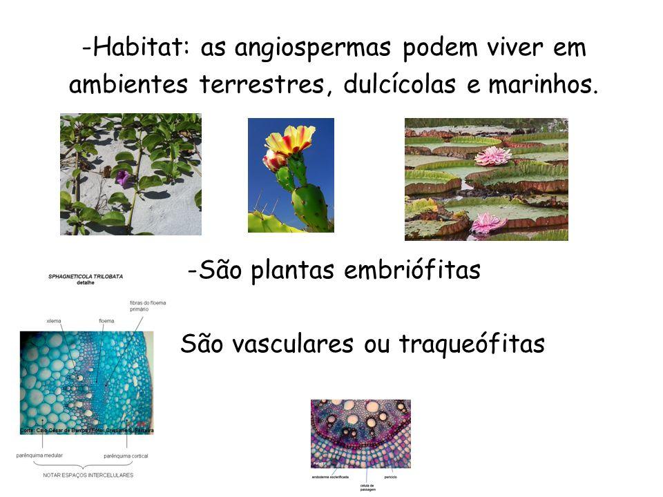 São plantas embriófitas São vasculares ou traqueófitas