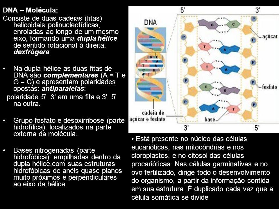 DNA – Molécula:
