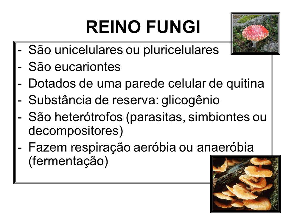 REINO FUNGI São unicelulares ou pluricelulares São eucariontes