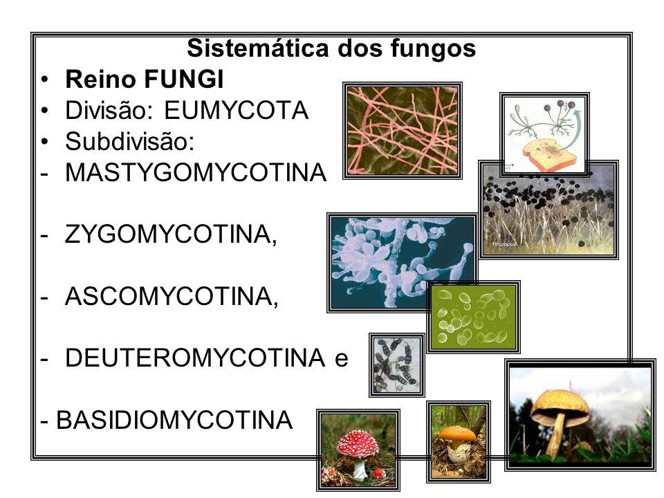 Sistemática dos fungos