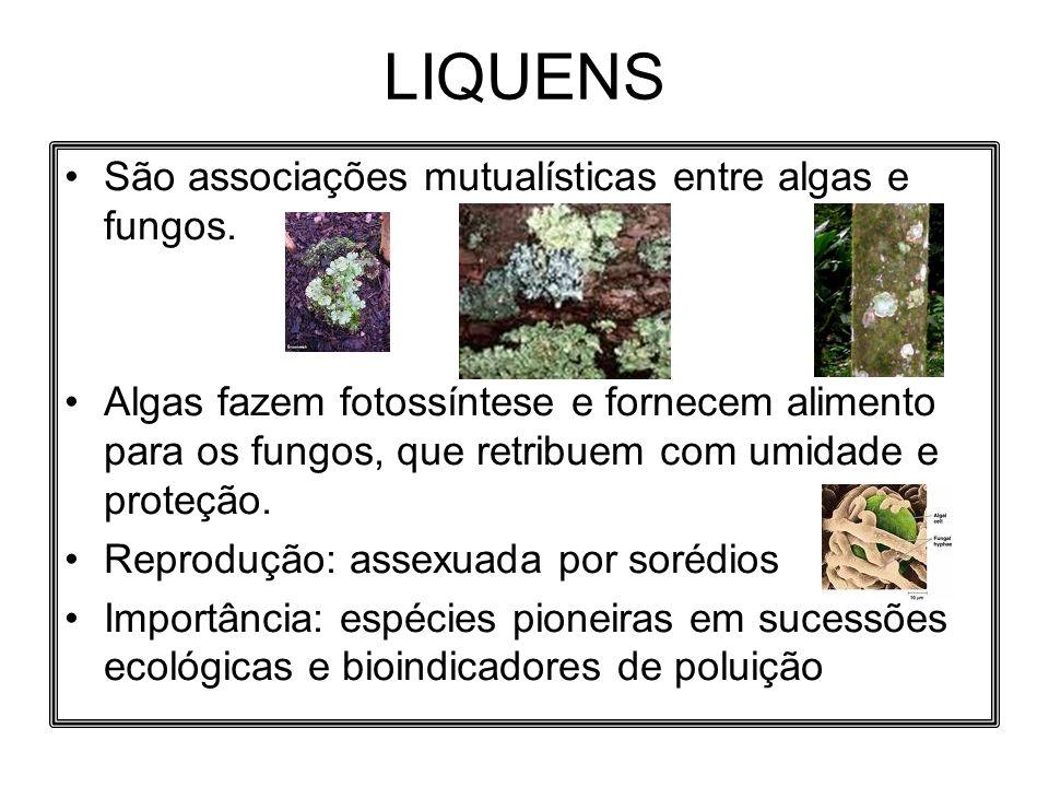 LIQUENS São associações mutualísticas entre algas e fungos.