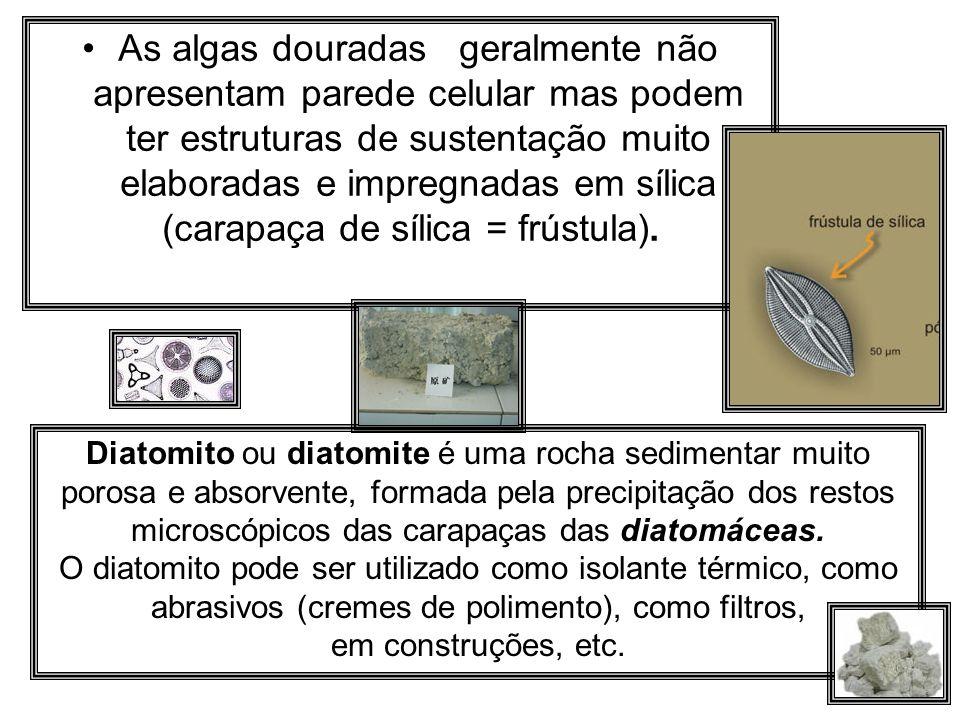 As algas douradas geralmente não apresentam parede celular mas podem ter estruturas de sustentação muito elaboradas e impregnadas em sílica (carapaça de sílica = frústula).