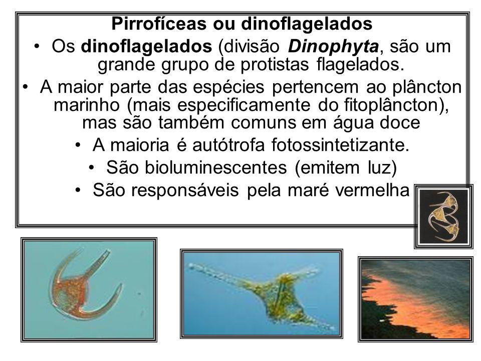 Pirrofíceas ou dinoflagelados