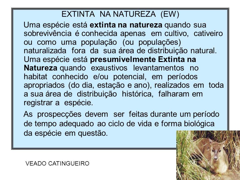 EXTINTA NA NATUREZA (EW)