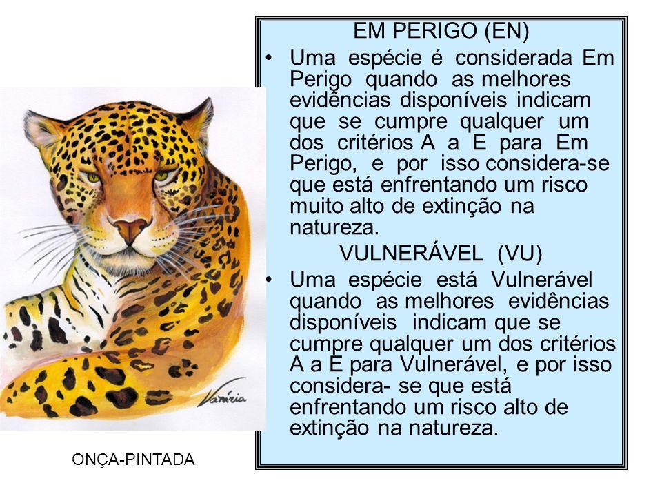 EM PERIGO (EN)