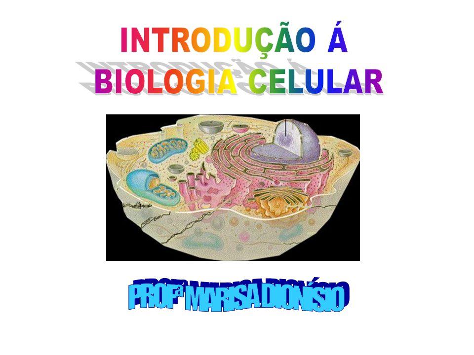 INTRODUÇÃO Á BIOLOGIA CELULAR PROFª MARISA DIONÍSIO