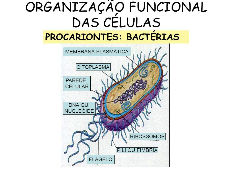 ORGANIZAÇÃO FUNCIONAL DAS CÉLULAS