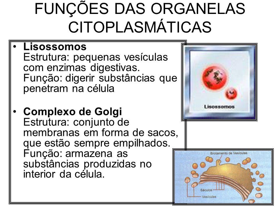 FUNÇÕES DAS ORGANELAS CITOPLASMÁTICAS