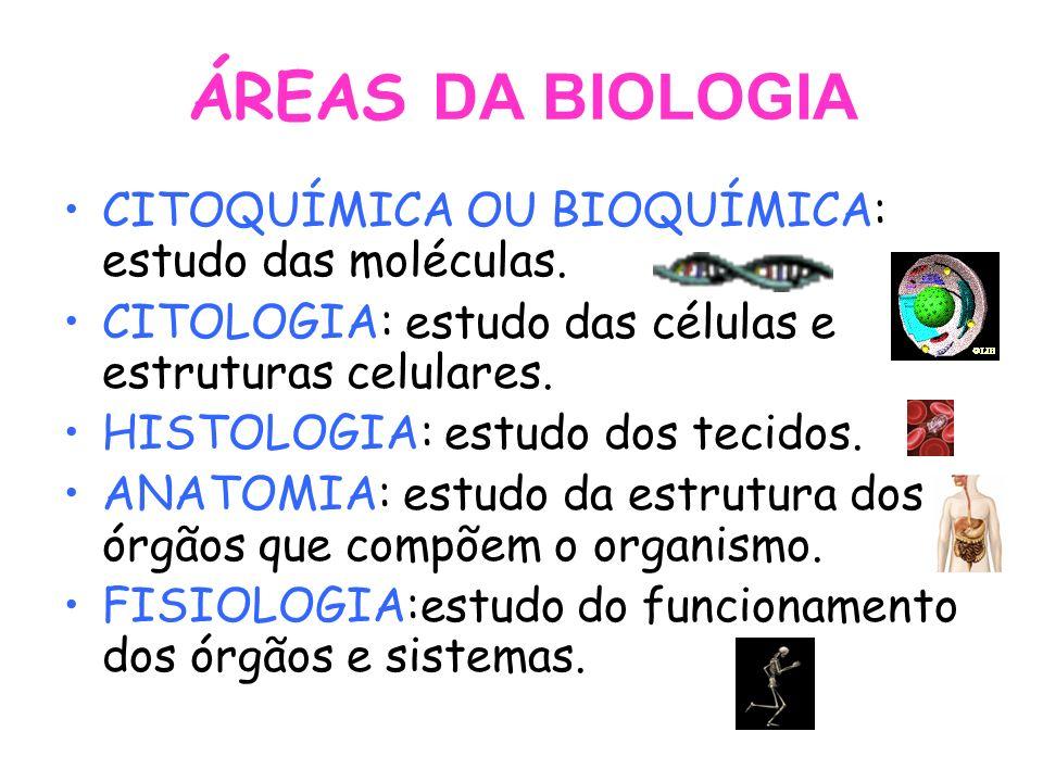 ÁREAS DA BIOLOGIA CITOQUÍMICA OU BIOQUÍMICA: estudo das moléculas.
