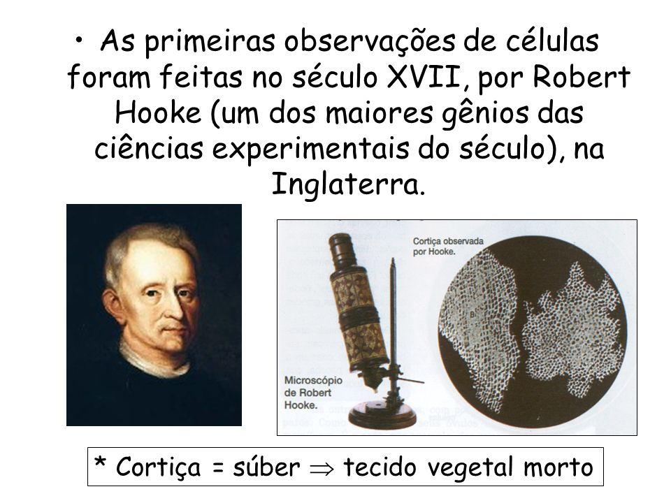 As primeiras observações de células foram feitas no século XVII, por Robert Hooke (um dos maiores gênios das ciências experimentais do século), na Inglaterra.