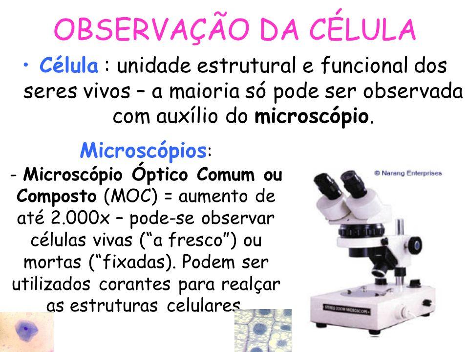 OBSERVAÇÃO DA CÉLULA Célula : unidade estrutural e funcional dos seres vivos – a maioria só pode ser observada com auxílio do microscópio.