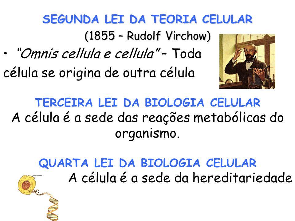 Omnis cellula e cellula – Toda célula se origina de outra célula