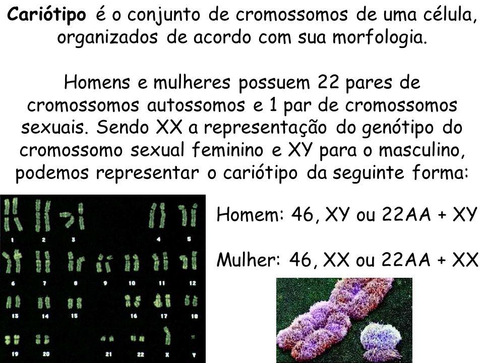 Cariótipo é o conjunto de cromossomos de uma célula, organizados de acordo com sua morfologia. Homens e mulheres possuem 22 pares de cromossomos autossomos e 1 par de cromossomos sexuais. Sendo XX a representação do genótipo do cromossomo sexual feminino e XY para o masculino, podemos representar o cariótipo da seguinte forma: