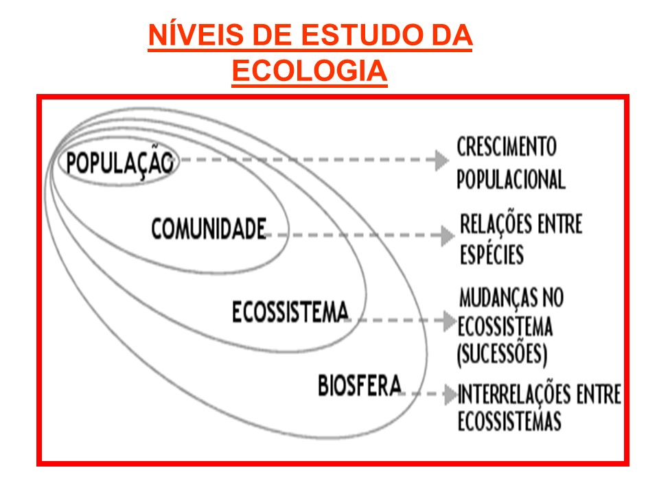 NÍVEIS DE ESTUDO DA ECOLOGIA