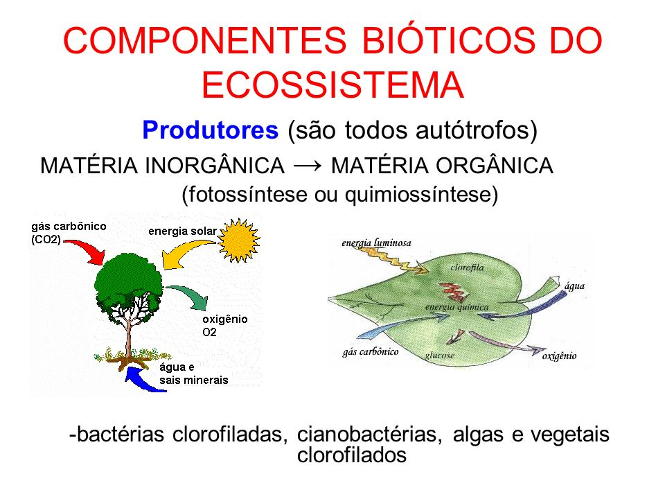 COMPONENTES BIÓTICOS DO ECOSSISTEMA