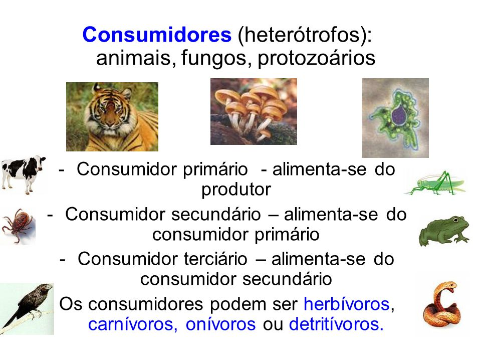 Consumidores (heterótrofos): animais, fungos, protozoários
