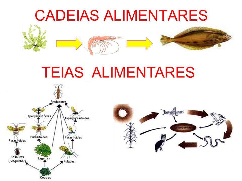 CADEIAS ALIMENTARES TEIAS ALIMENTARES
