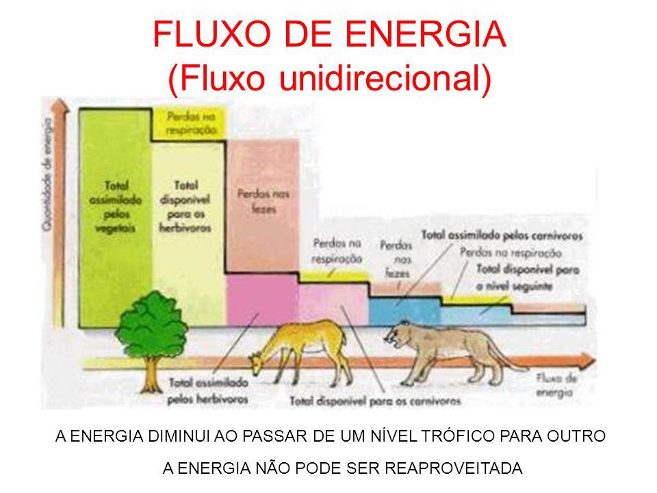 FLUXO DE ENERGIA (Fluxo unidirecional)