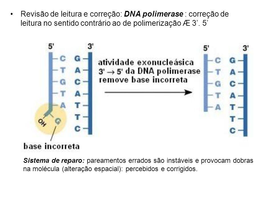 Revisão de leitura e correção: DNA polimerase : correção de leitura no sentido contrário ao de polimerização Æ 3'. 5'