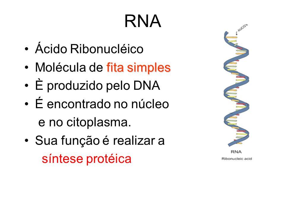 RNA Ácido Ribonucléico Molécula de fita simples È produzido pelo DNA