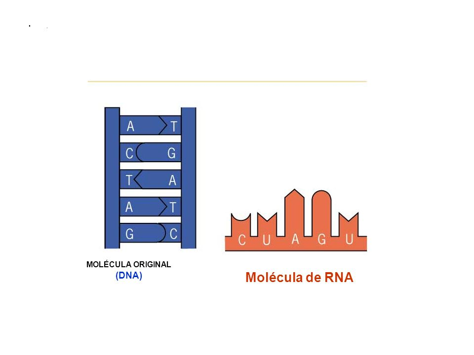MOLÉCULA ORIGINAL (DNA)