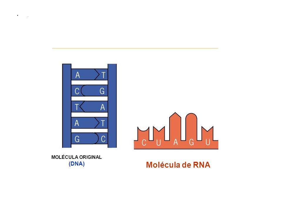 MOLÉCULA ORIGINAL (DNA)