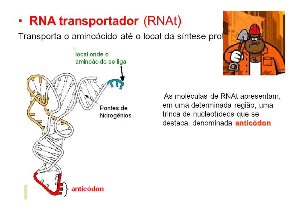 RNA transportador (RNAt)