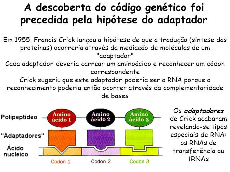 A descoberta do código genético foi precedida pela hipótese do adaptador