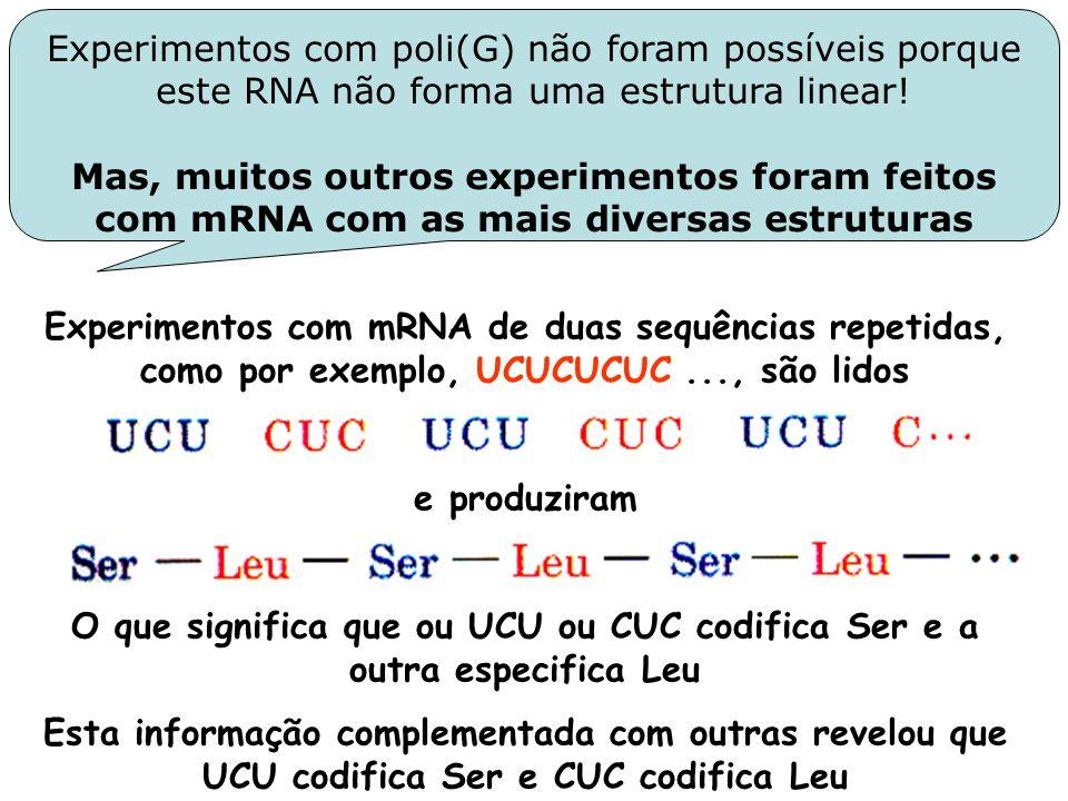 Experimentos com poli(G) não foram possíveis porque este RNA não forma uma estrutura linear!