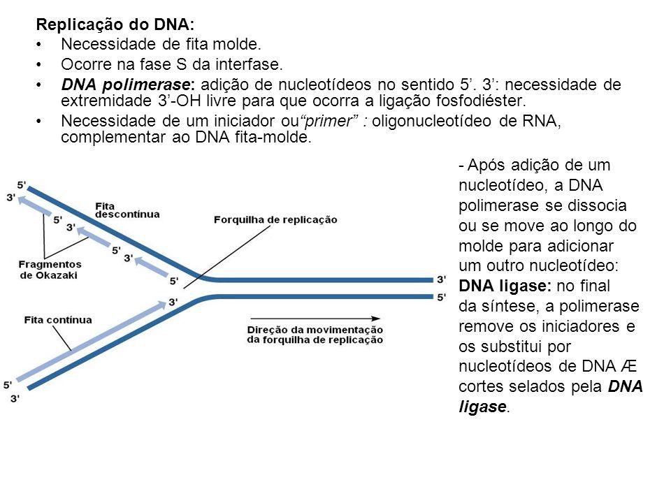 Replicação do DNA: Necessidade de fita molde. Ocorre na fase S da interfase.