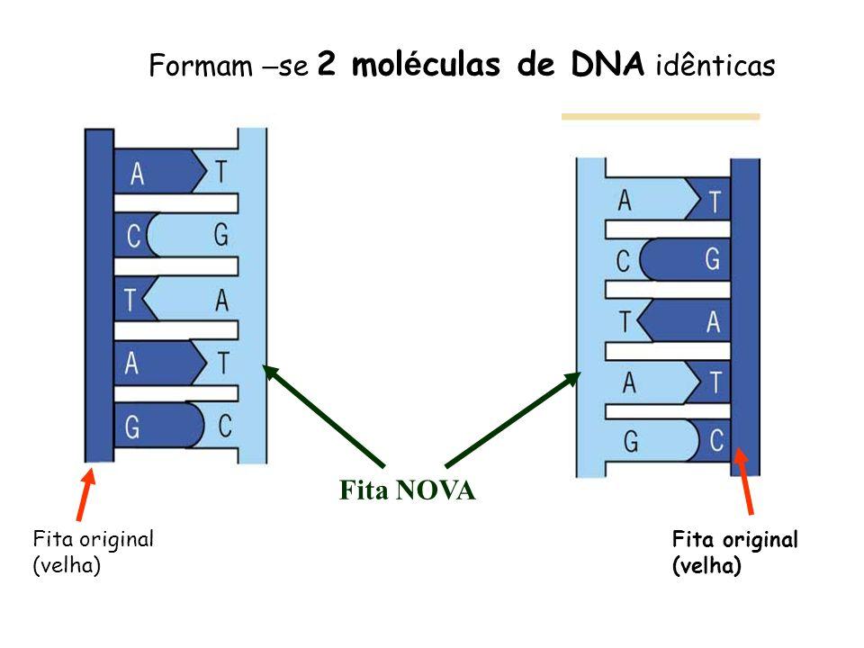 Formam –se 2 moléculas de DNA idênticas