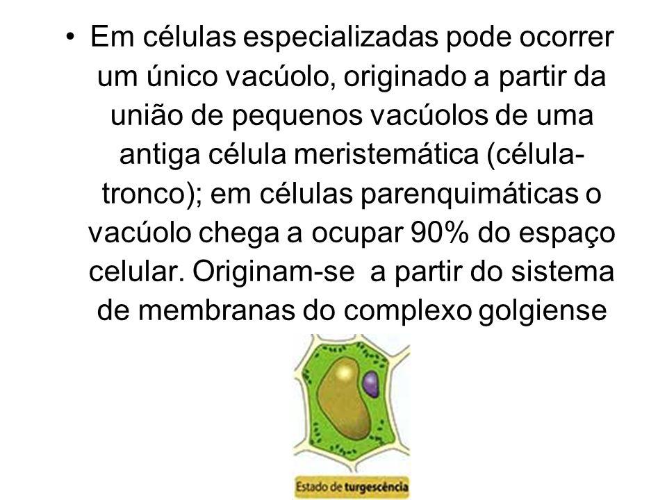 Em células especializadas pode ocorrer um único vacúolo, originado a partir da união de pequenos vacúolos de uma antiga célula meristemática (célula-tronco); em células parenquimáticas o vacúolo chega a ocupar 90% do espaço celular.