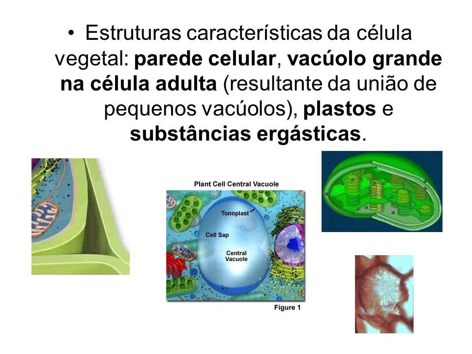 Estruturas características da célula vegetal: parede celular, vacúolo grande na célula adulta (resultante da união de pequenos vacúolos), plastos e substâncias ergásticas.