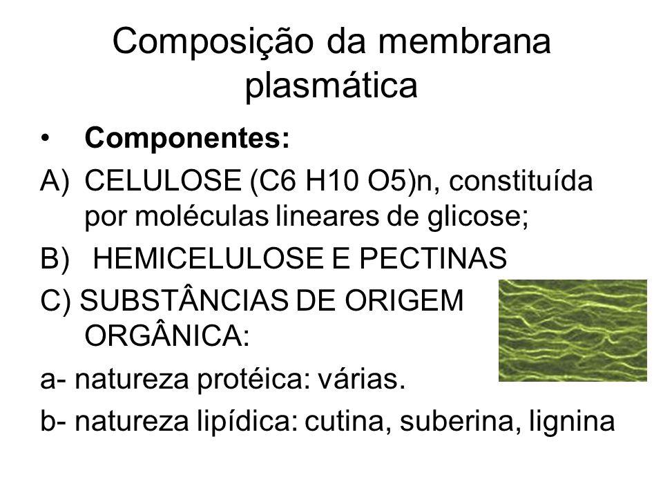 Composição da membrana plasmática
