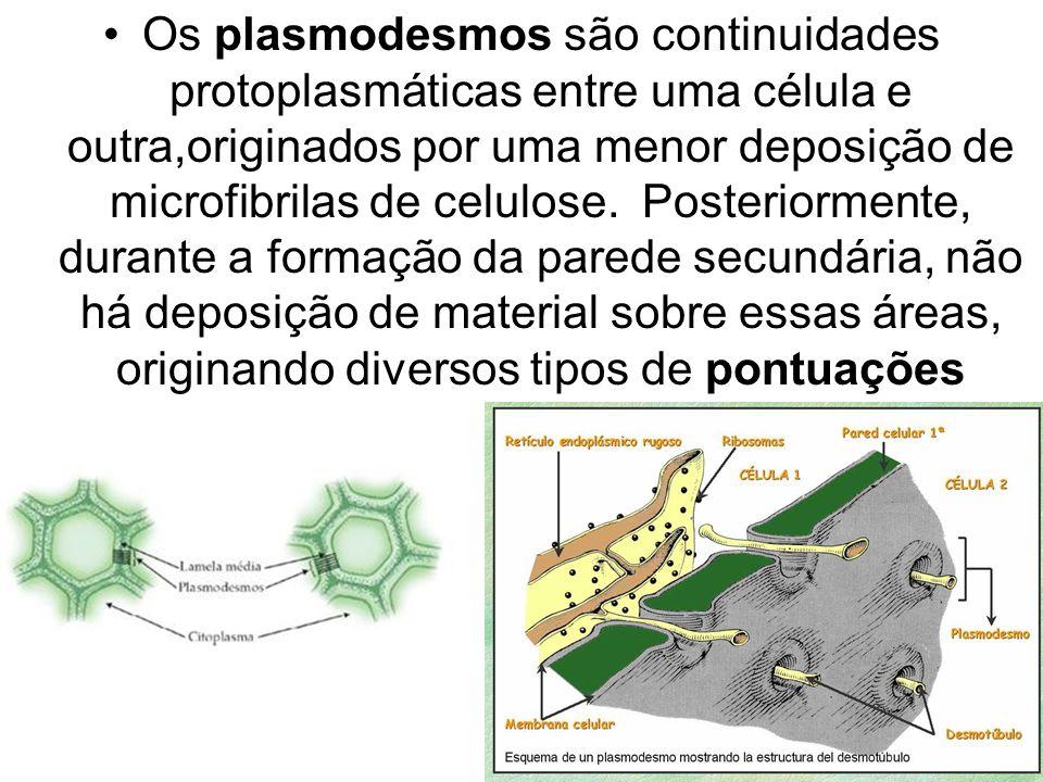 Os plasmodesmos são continuidades protoplasmáticas entre uma célula e outra,originados por uma menor deposição de microfibrilas de celulose.