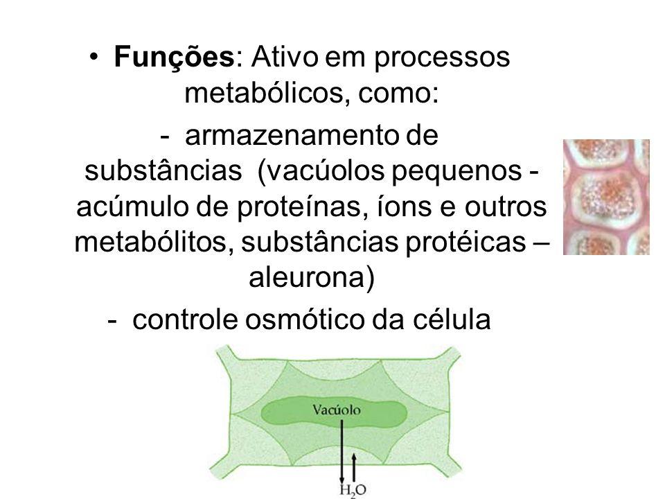 Funções: Ativo em processos metabólicos, como: