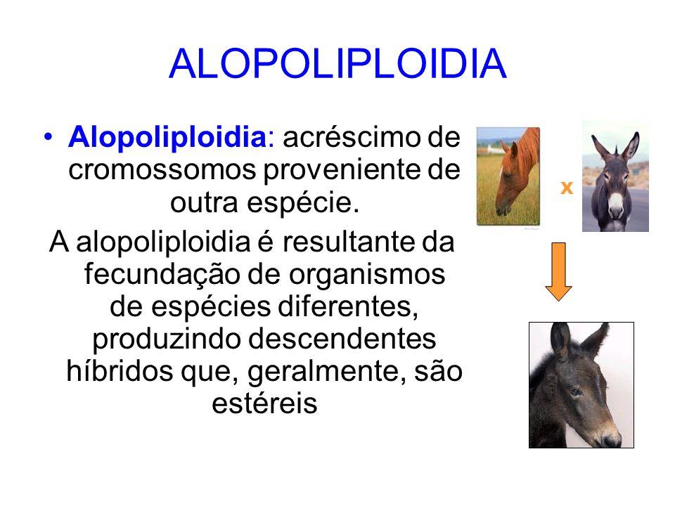 Alopoliploidia: acréscimo de cromossomos proveniente de outra espécie.