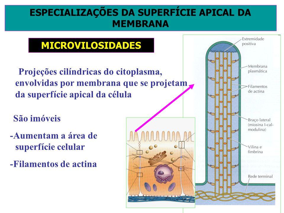 ESPECIALIZAÇÕES DA SUPERFÍCIE APICAL DA MEMBRANA