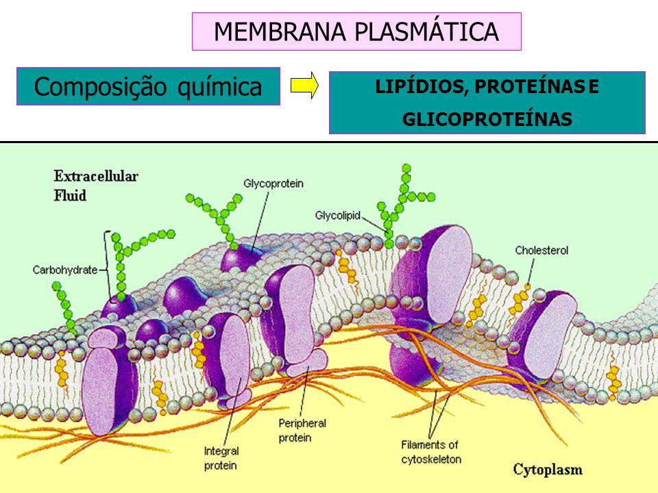 MEMBRANA PLASMÁTICA Composição química LIPÍDIOS, PROTEÍNAS E