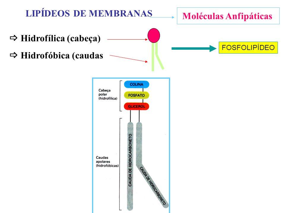 Moléculas Anfipáticas LIPÍDEOS DE MEMBRANAS