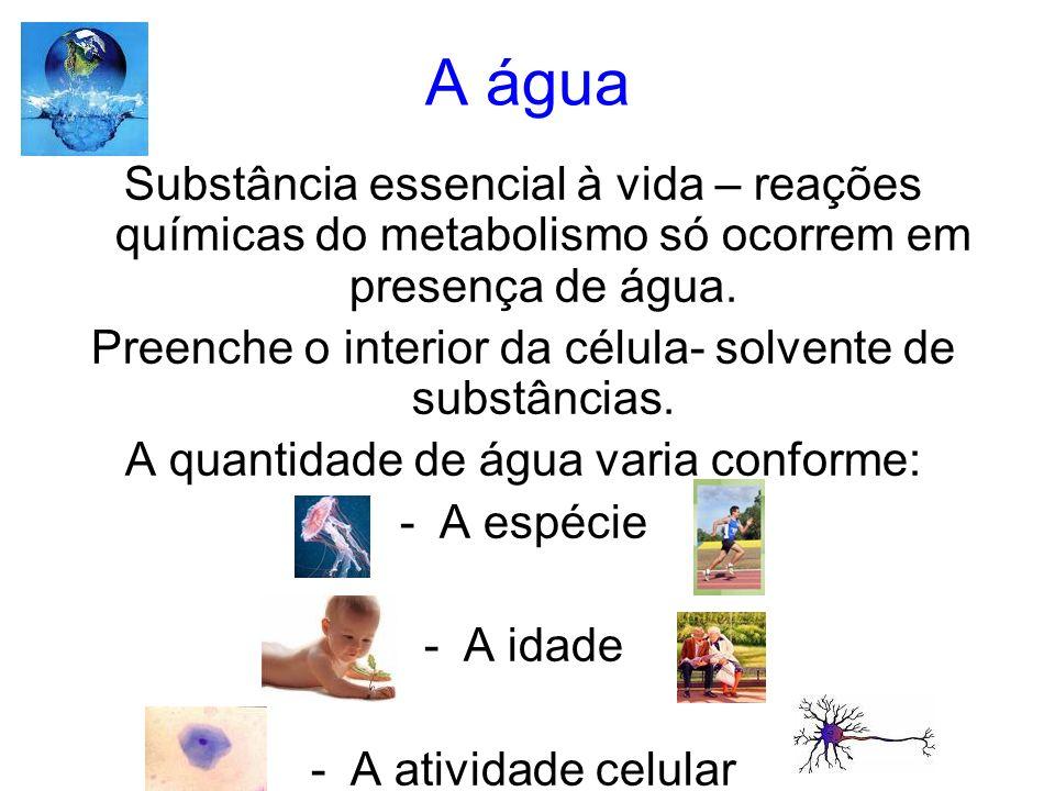 A água Substância essencial à vida – reações químicas do metabolismo só ocorrem em presença de água.